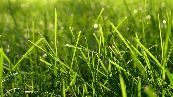 Organic-Lawn-Care-